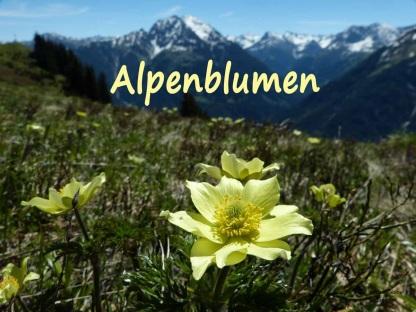 Frauenschuh Lechtal P1060659[8824] Sabine Mändler